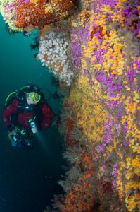 Diving on a local reef wall