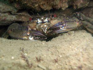 Friendly Crab